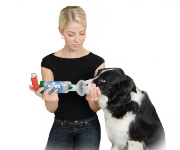Kobieta stosuje AeroDawg na swoim psie